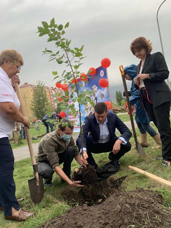 Еще в мае этого года на ул. Энергостроителей в Тюмени было высажено 25 деревьев
